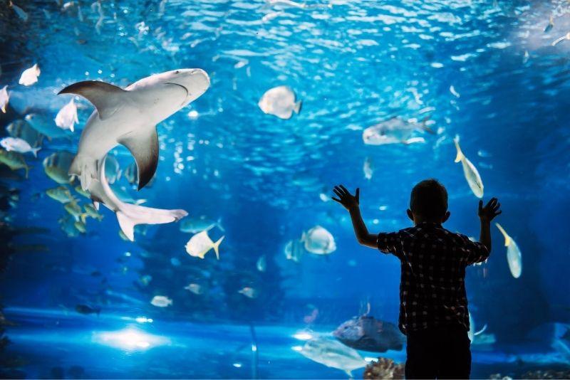 Sea Life Aquarium Porto, Porto