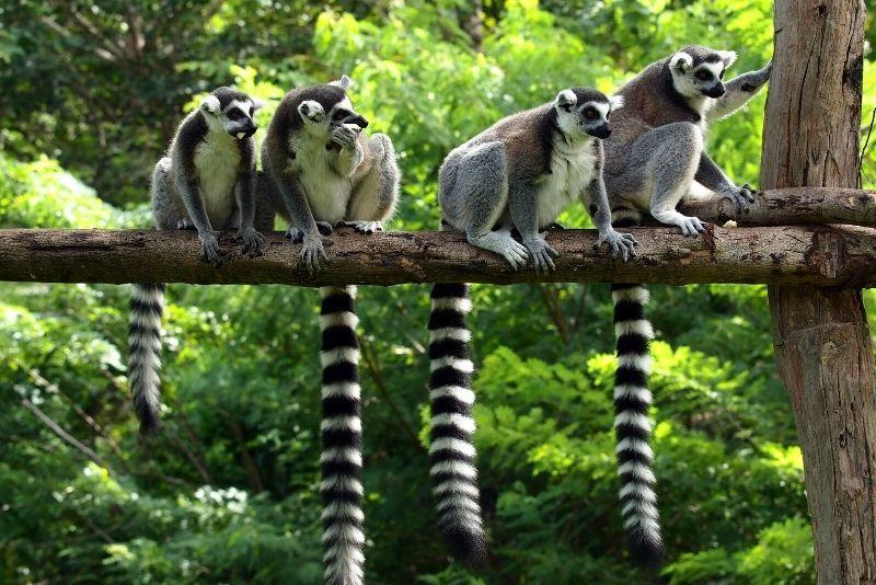 Zoo de Bordeaux Pessac